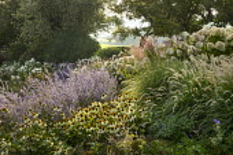 Echinacea purpurea 'White Swan', Perovskia 'Blue Spire', Miscanthus sinensis 'Kleine Silberspinne', Pennisetum 'Fairy Tails', Hydrangea paniculata 'Little Lime'