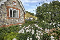 Flint cottage, Rosa 'Penelope'