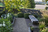 Wavy wooden bench in cutting garden, flint stone wall, white cactus dahlias in raised bed, Cherry tree, clipped box balls