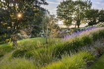 Pennisetum 'Fairy Tails', Perovskia 'Blue Spire', Rosa 'Iceberg', Geranium 'Brookside', Stipa gigantea, Sesleria autumnalis