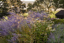 Stipa gigantea, Perovskia 'Blue Spire', Echinacea purpurea 'White Swan', Nepeta racemosa 'Walker's Low'