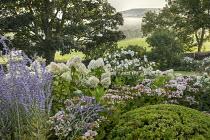 Perovskia 'Blue Spire', Hydrangea paniculata 'Little Lime', Anemone × hybrida 'Honorine Jobert', Hebe rakaiensis