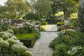 Stone paving, clipped Buxus sempervirens cube, Rosa 'Penelope'