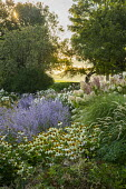 Perovskia 'Blue Spire', Echinacea purpurea 'White Swan', Pennisetum 'Fairy Tails', Hydrangea paniculata 'Little Lime', Miscanthus sinensis 'Kleine Silberspinne'