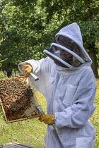 Beekeeper in beekeeping suit holding beehive frame