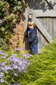 Boy at wooden gate, Hakonechloa macra, aster