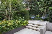 Multi-stemmed prunus and euphorbia in raised bed, chairs on stone patio, yew hedge