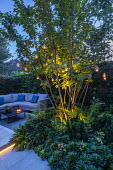 Multi-stemmed prunus, euphorbia, ferns, outdoor sofa with cushions, hanging candle lanterns