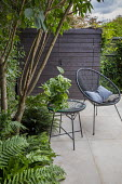 Multi-stemmed prunus, chairs on stone patio, wooden shed