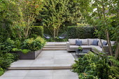 Multi-stemmed prunus and euphorbia in raised bed, outdoor sofas and chairs on stone patio, yew hedge