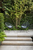 Multi-stemmed prunus, chairs on stone patio, steps