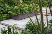Stone patio, multi-stemmed prunus in raised bed underplanted with ferns and euphorbia