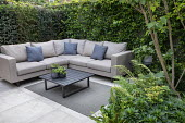 Multi-stemmed prunus underplanted with euphorbia and ferns, outdoor sofas with cushions on outdoor rug, yew hedge screen