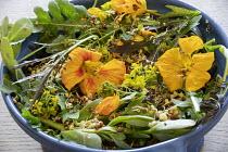 Salad in bowl, edible flowers, nasturtium, mustard, sprouting seeds, purslane, Salad leaves 'Purple Frills'