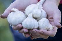 Woman holding garlic bulbs