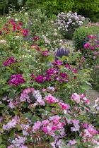 Path through rose garden, Rosa 'Schengen Rose' (2010), Rosa 'Princesse Sibilla de Luxembourg', salvia