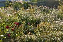 Pennisetum, Rosa 'Rousefrenn', miscanthus, Veronicastrum virginicum 'Album' seedheads, Anemone × hybrida 'Honorine Jobert', Rosa 'Ville d'Ettelbruck'