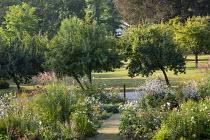 Roses, Gaura lindheimeri, pennisetum, miscanthus, veronicastrum seedheads, Anemone × hybrida 'Honorine Jobert'