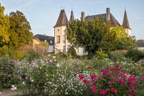 Path through rose garden, Gaura lindheimeri, Rosa 'Grand-Duc Jean'