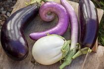 Harvested aubergine varieties on table