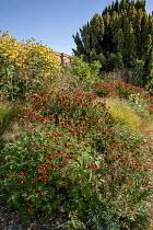 Rudbeckia laciniata 'Juligold', helenium, Tagetes linnaeus, Anemanthele lessoniana