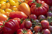 Harvested tomato varieties