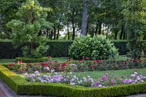 Roses in box-edged borders, hydrangea