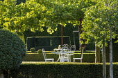 White metal table and chairs under London plane tree, clipped yew and box hedges