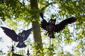 Owl ornaments cut out of metal