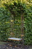 Hornbeam hedge trained as canopy over metal chair, mini arbour