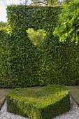 Heart-shaped box topiary, clipped window in hornbeam hedge, garden 'room', Valentine's Day