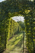 Clipped arch in hornbeam hedge, gate