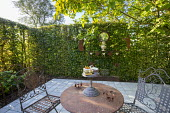 Metal table and chairs on patio surrounded by hornbeam hedge enclosure, garden 'room'