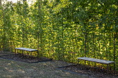 Wood and metal trellis benches against hornbeam hedge