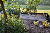 Wooden compost bins, squash trained up metal trellis, metal hen ornaments, sage