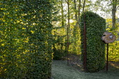 Metal gates into hornbeam hedge enclosure