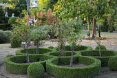Flower-shaped clipped box hedge parterre