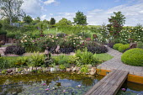 Wooden bridge across water lily pond, pebble edging, rose garden, heuchera, Rosa 'Charles Austin', Rosa 'Munstead Wood'