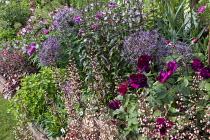 Roses, Allium cristophii, heuchera