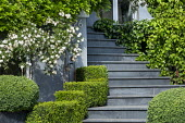 Steps leading to front door, clipped Buxus sempervirens cubes
