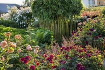 Bamboo in rose garden, ferns, heuchera