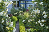 Roses in white garden, low clipped box hedges