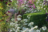 Rose garden, clipped box hedge