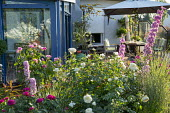 Table and chairs with cushions on decking under umbrella, Rosa 'Gertrude Jekyll', Rosa 'Tranquility', delphiniums, Rosa 'Rose de Recht'