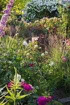 Rose garden, Rosa 'Rose de Recht', Rosa 'Tranquility', Rosa 'Charles Austin', Rosa 'Munstead Wood', Rosa 'White Flight' on arbour