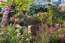 Roses, delphiniums and veronicastrum, heuchera, catalpa