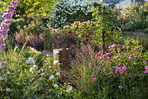 Roses, delphiniums and veronicastrum, heuchera, catalpa, Rosa 'Louise Odier', Rosa 'Tranquillity', Rosa 'Cardinal Hume', Rosa 'Munstead Wood', Rosa 'Charles Austin', Rosa 'White Flight'