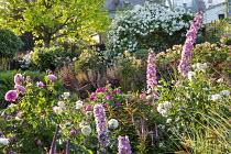 Roses, delphiniums and veronicastrum, catalpa, heuchera