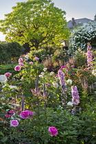 Roses, delphiniums and veronicastrum, catalpa