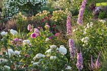 Roses, delphiniums and veronicastrum